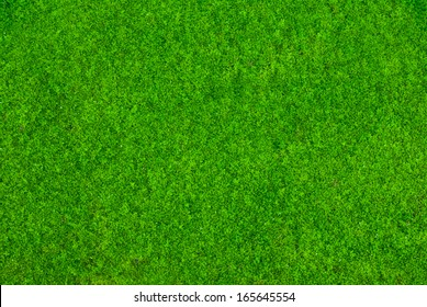 top view green moss  for background  texture