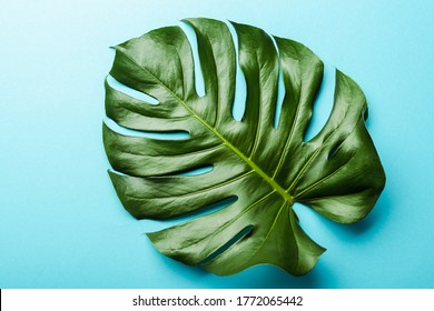 top view of green palm leaf on blue background
