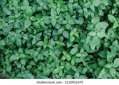 Top view of green plant.
