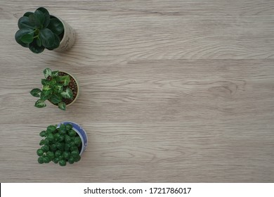 A top view of green plants in a cute small pot on an oak wooden background