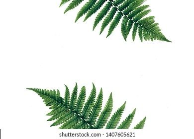 Top view of green tropical fern leaves on white background. Flat lay. Minimal summer concept with fern leaf. Creative copy space