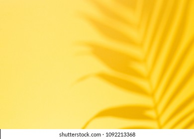Top view of green tropical leaf Monstera shadow on yellow background. Flat lay. Summer concept with palm tree leaf, copyspace