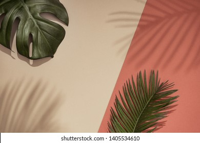 Top view of green tropical leaves and shadow on orange and sand color background. Flat lay. Minimal summer concept with palm tree leaf. Creative copyspace.