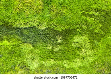 Top view of green wet grass, background, texture