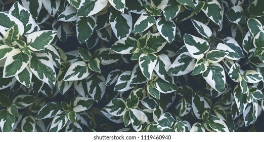 Top view of green and white leaves for background