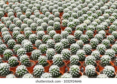 Top view of group of cactus succulent in a pot.