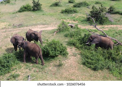 Top view of a herd of african elephant grazing amongst the trees