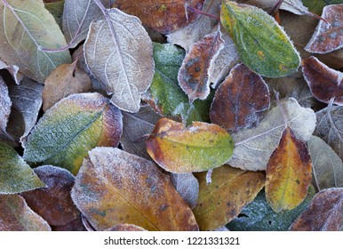 Top view of hoar frost covered colorful leaves of apple tree on ground