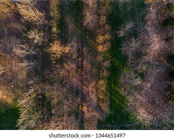 Top view horizontal aerial perspective of a land with bare trees, grass and plants at sunset with long shadows