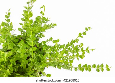 top view of House Plant isolated on white background