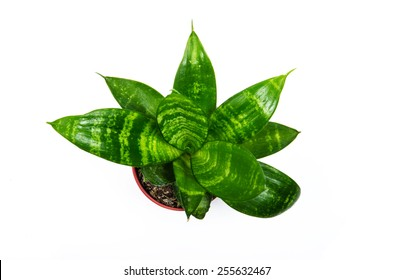 Top view for House plant on white background