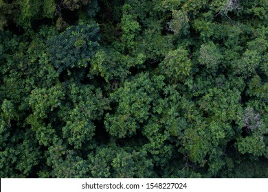 Top view of humid forest located in Thailand.