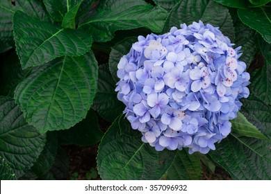 Top view of hydrangea flower - Shutterstock ID 357096932