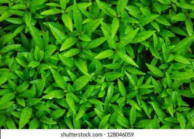 top view leaf background