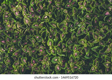 Top view of leaf small plant in garden. For texture and background concept