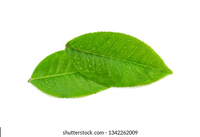 Top view of leaves green tea with drops of water isolated on white background