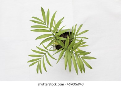 Top view of little palm trees on white background. Focus some spot.