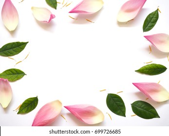 Top view of lotus petals with green leaves and yellow pollen on white background. Floral pattern. Flat lay.