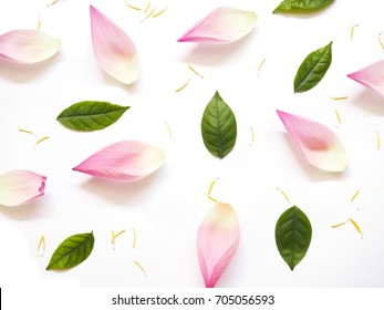 Top view of lotus petals with green leaves and yellow pollen on white background. Flat lay.