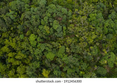 Top view of the lush green plant on mountain