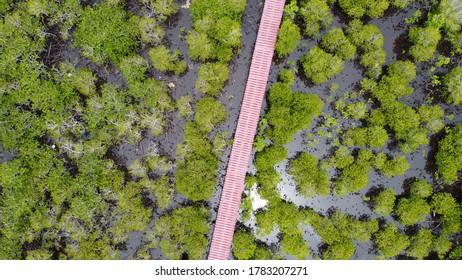 Vista superior del bosque de manglares en Tailandia.