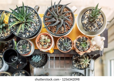 Top view of many mini cactus plant ornament in house