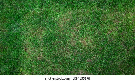 Top view of a meadow
