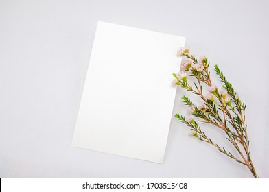 Top view mockup blank card, for greeting, wedding invitation template with Wax flower on white background.
