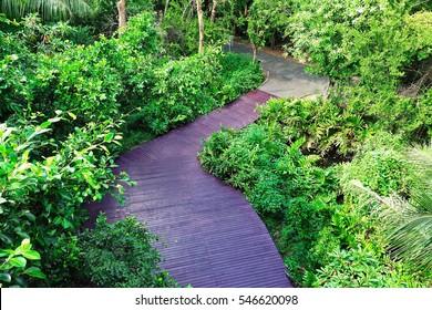Top view nature trail walk Forest Green fresh air wooden walkway Bird Observatory