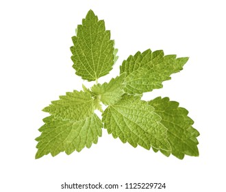 Top view Nettle leaf isolated on white