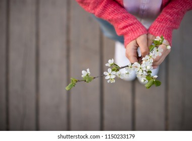 Top view on blooming cherry in woman's hands on wooden background. Spring flowers. Nature. Outdoors.