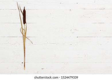 Top view on bulrush or reed lying on a white wooden background. Minimalism.