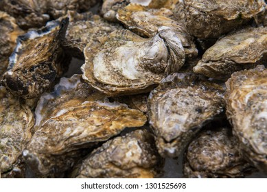 Top view on food background of fresh whole closed oysters on crushed ice.