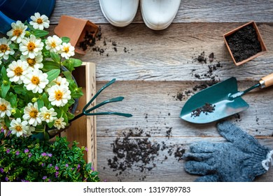 Top view on gardening a shovel filled with soil and flowers potted tool in the garden summer spring time, copy space.  Lifestyle Concept