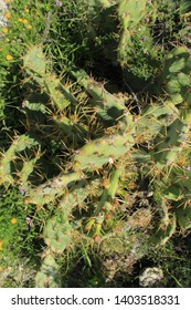 top view on green cactus