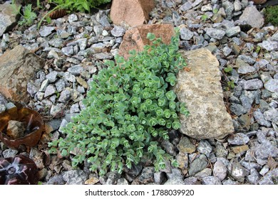 Top view on green plants, growing on a placer of stones.