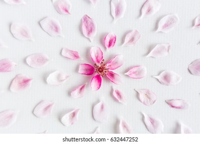 top view on part of round pattern of sacura flowers laying on white background. Concept of love and spring. Dof on sacura flowers.