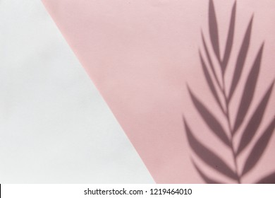 Top view on pink background with sunlight and shadow of coconut, tropical palm leaves, monstera. travel concept, flatlay