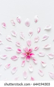 top view on round pattern of sacura flowers laying on white background. Concept of love and spring. Dof on sacura flowers.