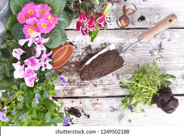 top view on a shovel filled with soil and flowers potted on a garden  table