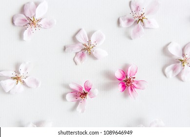 top view on white background filling with sacura flowers. Concept of love. hi key spring pattern. Dof on sacura flower. top view.