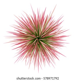 top view of ornamental grass plant isolated on white background. 3d illustration