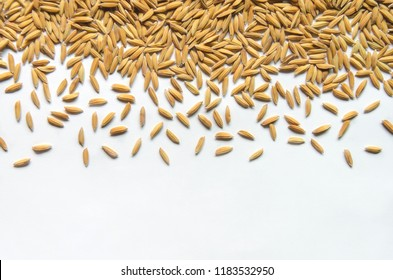 Top view of paddy rice and rice seed on the white background, Background and wallpaper by pile of paddy rice seed, Close-up of brown rice grain.
