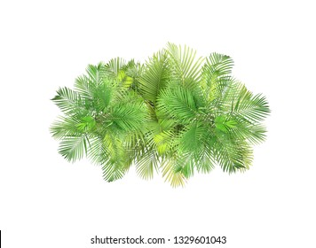 top view palm leaves tree isolated on white background