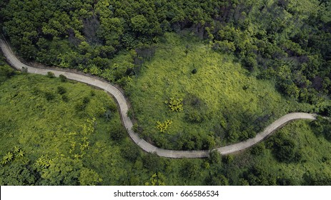 Top view of the path through the trees. View from drone