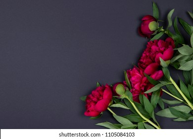 Top view of peonies flowers on dark background with copy space. Flat lay.