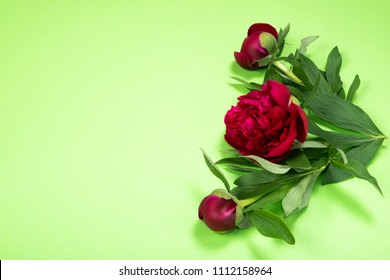 Top view of peonies flowers on green background with copy space. Flat lay.