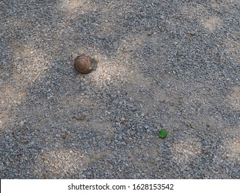 Top View of petanque game, petanque bowls under the tree.Petanque balls in the playing field,Sports and tourism concepts