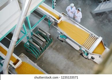 Top view portrait of two factory workers standing by conveyor belt during quality inspection at food production, copy space