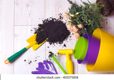 Top view of potted roses, plastic colorful flower pots and gardening tools on bright wooden floor. Planting concept